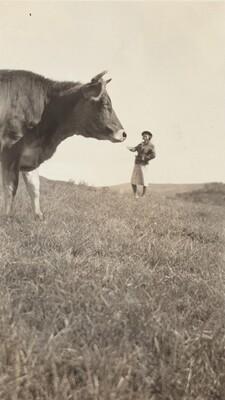 Untitled (Woman feeding cow)