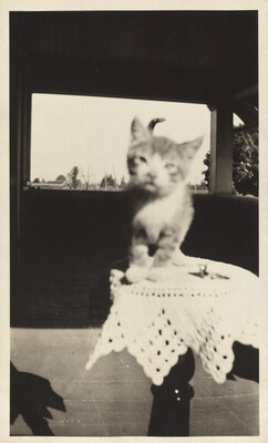 Untitled (Kitten perched on table)
