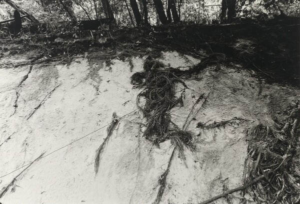 Untitled (Silueta series)