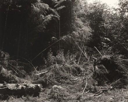 Bulldozed slash, Tillamook County, Oregon