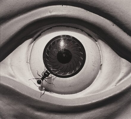 Untitled (Eye with Ant)
