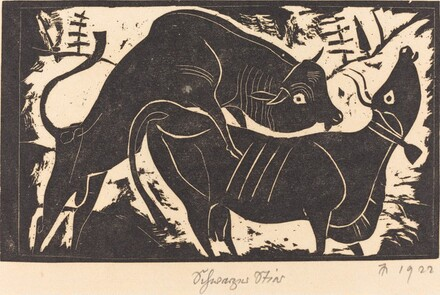 Schwarzer Stier (Black Cattle)