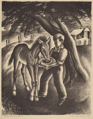 Boy Feeding Colt
