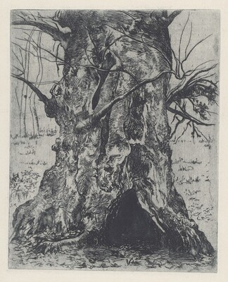 Untitled (Tree Trunk)