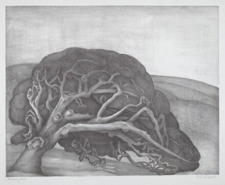 Monterey Oak