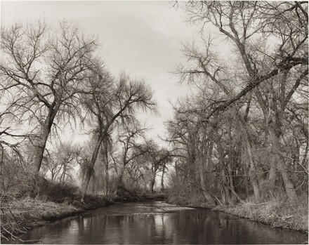 Cottonwoods Along Cache la Poudre River, Colorado