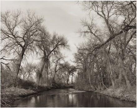 Cottonwoods Along Cache la Poudre River, Colorado