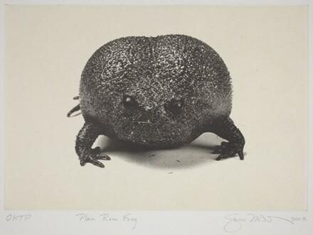 Plain Rain Frog