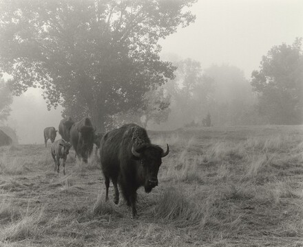 The Merrival Family's Buffalo Ranch