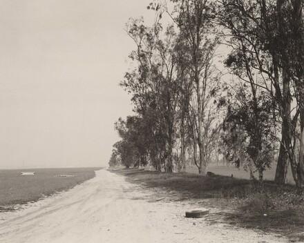 Abandoned windbreak, west of Fontana, California