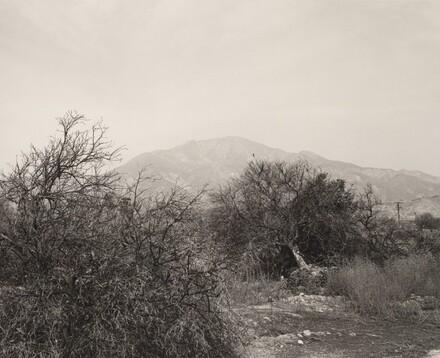 Defoliated orchard, Highland, California