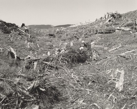 Clearcut, Humbug Mountain, Clatsop County, Oregon
