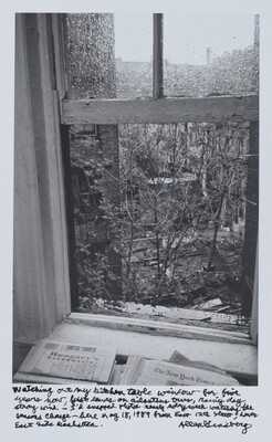Watching out my kitchen table window for five years now, first leaves on ailanthus trees, rainy day strong wind—I'd snapped photos nearly every week watching the seasons change—here May 18, 1989 from East 12th Street, Lower East Side Manhattan.