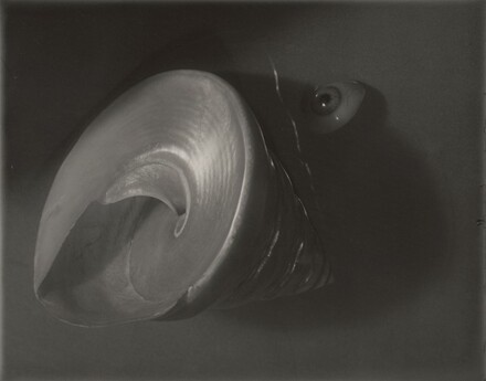 Still Life: Shell and Eye