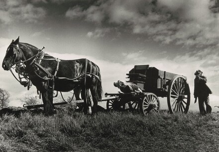 Connecticut farmer and his team of horses, West Suffield, Connecticut