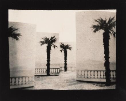 Paper Palms, California