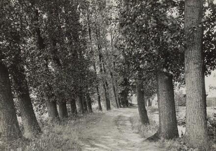 Pappeln (Poplars)