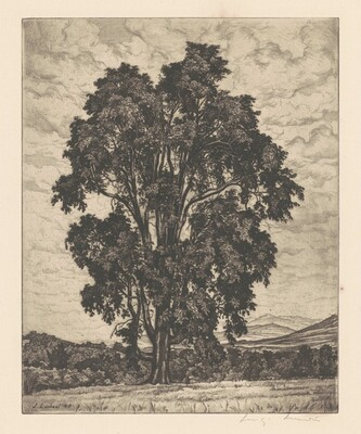Elm on the Hill