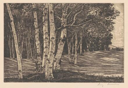 Birch Processional