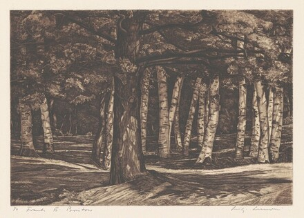 Pine in the Birches