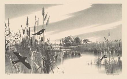 Long Island Marshes
