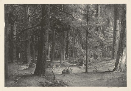 Forest Shade