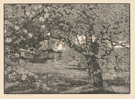 Spring in the Old Orchard