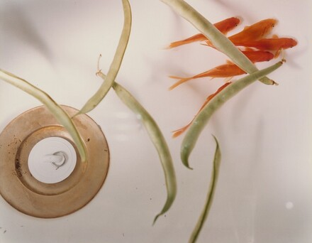 Goldfish and Stringbeans (#99)