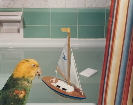 Parrot and Sailboat (#98)