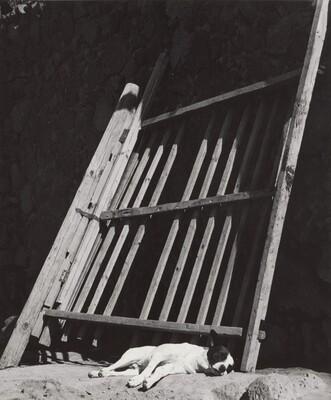 Los Perros Durmiendo Ladran (Sleeping Dogs Bark)