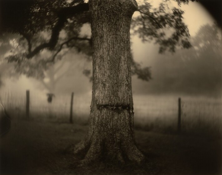 Sally Mann, Deep South, Untitled (Scarred Tree), 1998