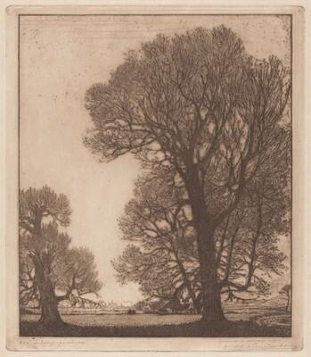 Poplars, Santpoort [Zilverpopulieren, Santpoort]
