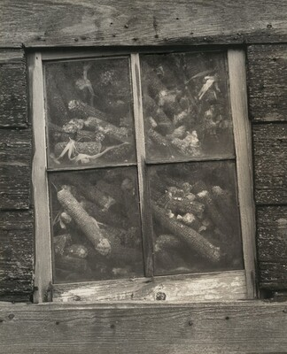 Corncrib with Cobs at Window