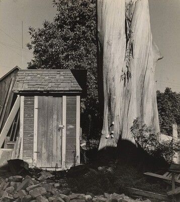 Outhouse and Eucalyptus Tree, California