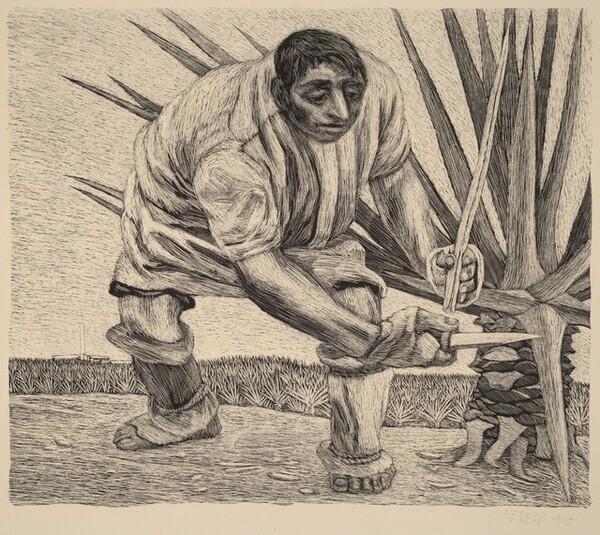 Henequén Worker