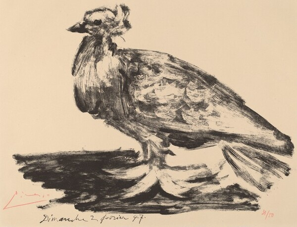 The Large Pigeon (Le gros pigeon)