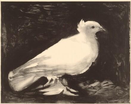 Dove (La colombe)