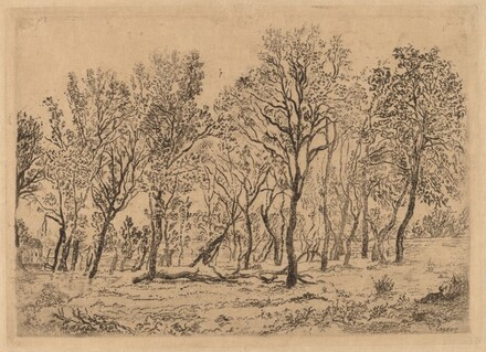 Stand of Trees (Bouquet d'arbres)