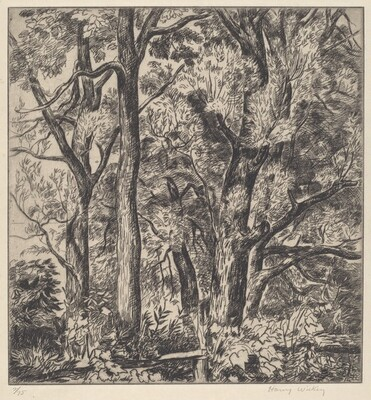 Woods Scene