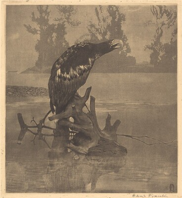 Bedraggled Eagle on a Stump