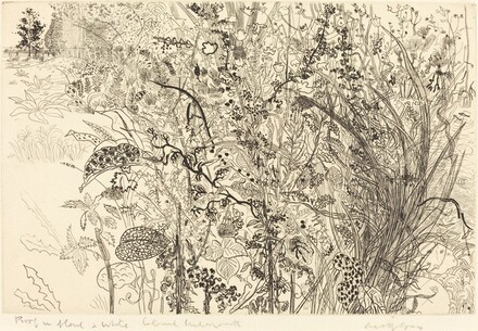 Tangled Undergrowth