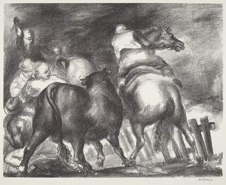 Escaped Bull