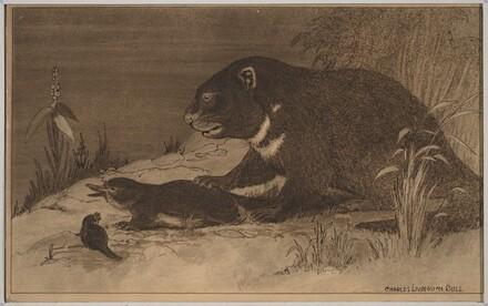 Illustration for Bird Beast