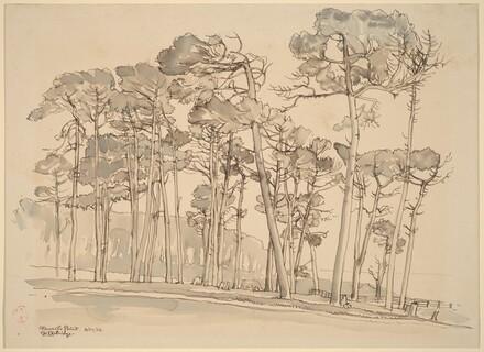 Pines, Stewart Point, Monterey