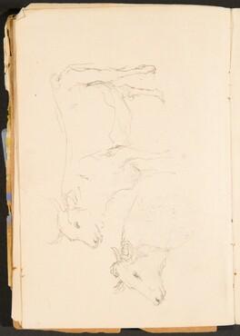 Zwei Studien eines Ochsen (Two Studies of a Bullock) [p. 8]