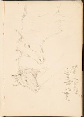 Zwei Studien eines Ochsenkopfes, Notizen  (Two Studies of a Bullock's Head, Notation) [p. 9]