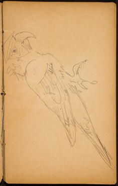 Papagei (A Parrot) [p. 19]