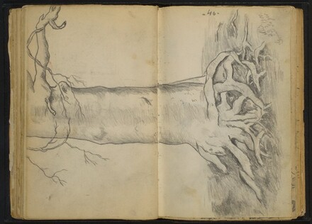 Tree with Gnarled Roots