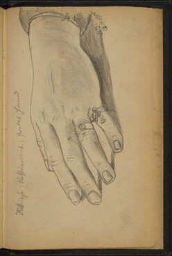 Study of a Woman's Hand with Rings