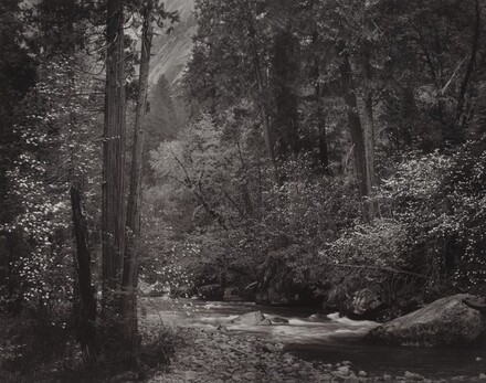 Tenaya Creek, Dogwood, Rain, Yosemite National Park, California